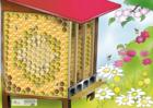 lejeuabeillezvous_plateau-jeu-abeilles.png