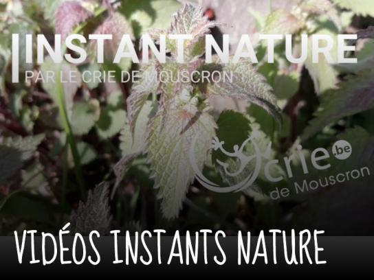 Instants nature Lien vers: https://criemouscron.be/?InstantnaturE