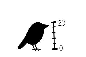 image moyen_oiseau.jpg (23.1kB)