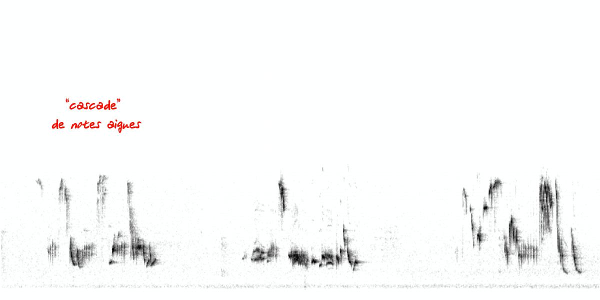 image spectrogramrg.png (0.1MB)