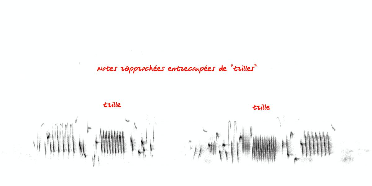 image spectrogramgrivemusi.png (0.1MB)